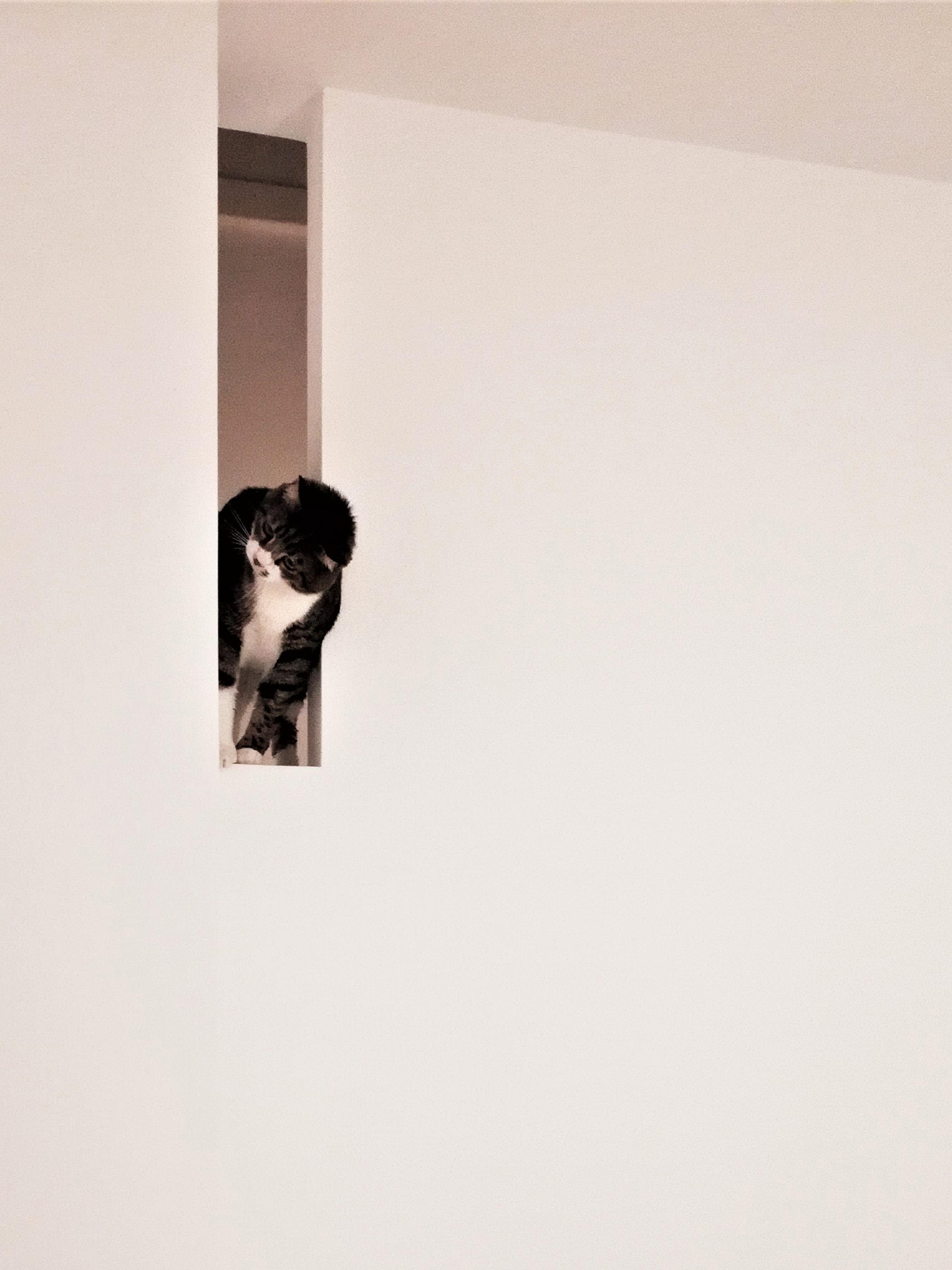 casa SQ AA. mike appollaiato sul taglio nella parete della scala.